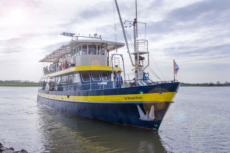 safarischip de blauwe bever
